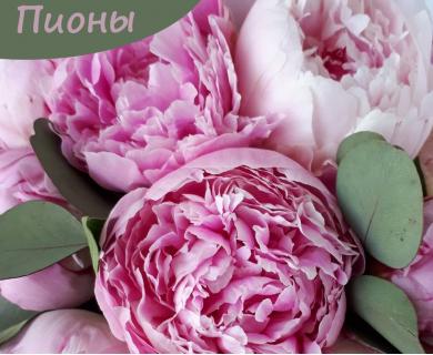 крымская роза