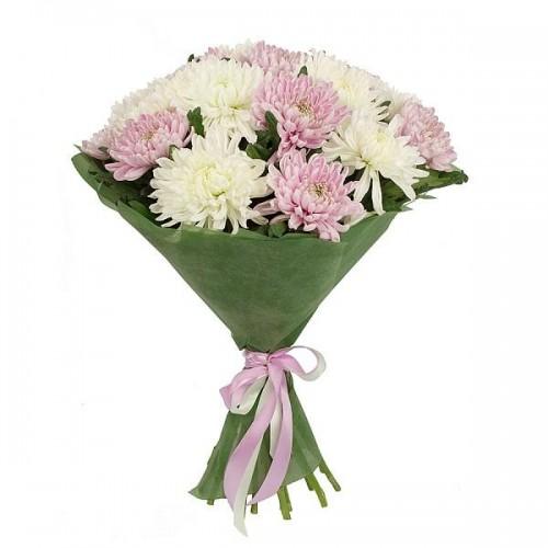 Букет из белых и розовых хризантем (7 — 101)
