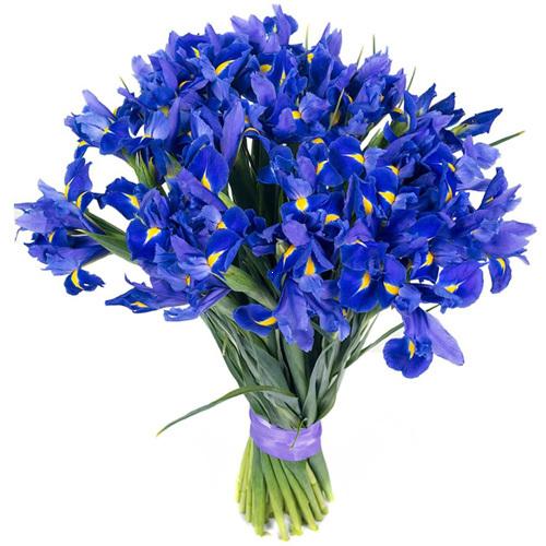 Букет из синих ирисов (25, 35, 51)