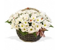 Корзина белых кустовых хризантем (15 - 101)