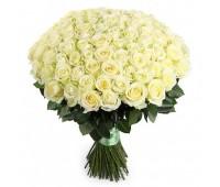 101 белая крымская роза
