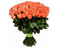 101 пионовидная роза Free Spirit