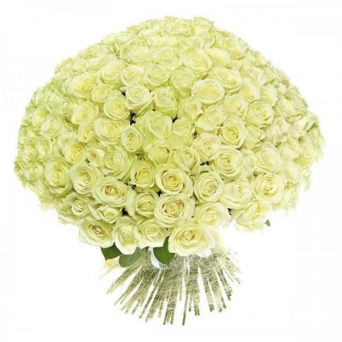 101 голландская белая роза