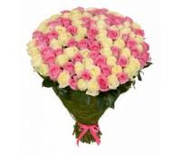 101 голландская белая и розовая роза