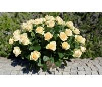 Кремовая роза в корзине