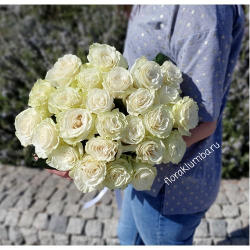 Белая голландская роза