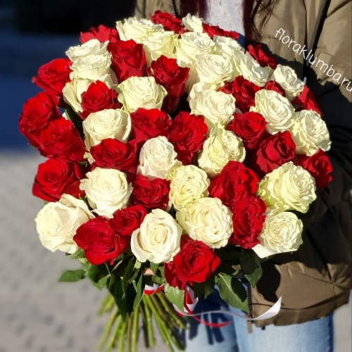 51 белая и красная импортная роза