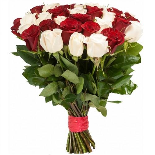 25 красных и белых голландских роз