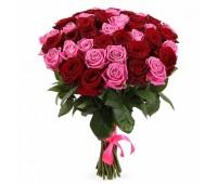 25 розовых и красных голландских роз   ( 70 см)