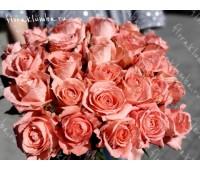 """Роза импорт  """"Anna Karina"""""""