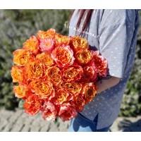 Пионовидная роза Free Spirit