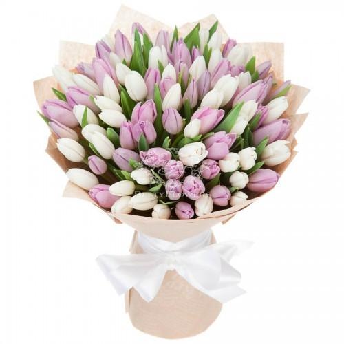 101 белый и розовый тюльпан (51, 31)