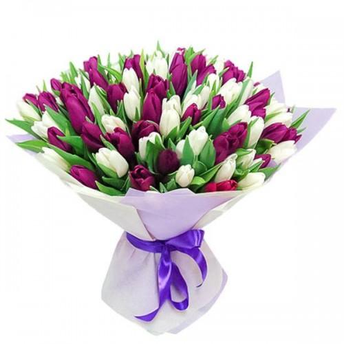 101 фиолетовый и белый тюльпан (51, 31)