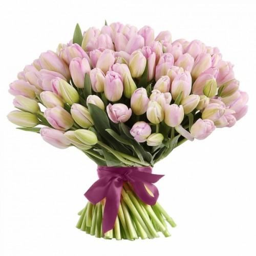 101 розовый тюльпан  (51, 31)