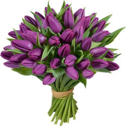 31 фиолетовый тюльпан (11 - 101)