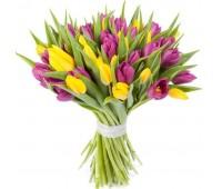 31 фиолетовый и жёлтый тюльпан (11 - 101)