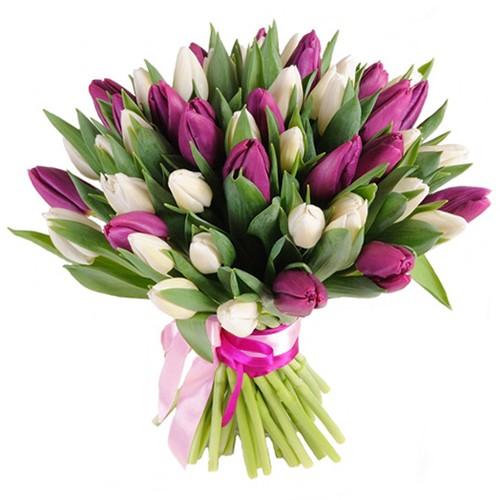 51 фиолетовый и белый тюльпан (от 11 до 101)