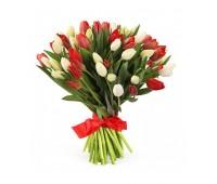 51 красный и белый тюльпан (11 - 101)