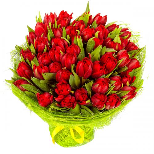 51 красный тюльпан (31, 101)